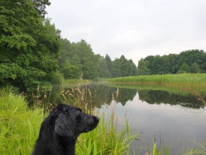 Feldeck_Wasserseminar_Juli_2017_002